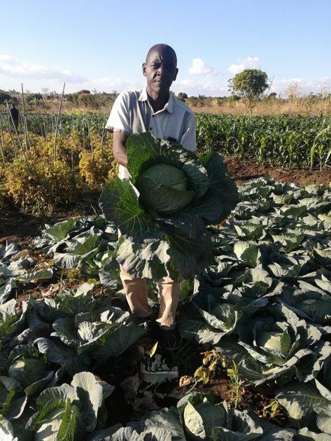 Feston Zale logró salir del desempleo en que estaba sumido largo tiempo al decidirse a transformar un humedal que heredó de sus padres en una finca hortícola, en Chileka, en el sur de Malawi. En la imagen, el joven agricultor muestra orgulloso una de sus coles, que han recibido premios por su calidad. Foto: Esmie Komwa Eneya / IPS