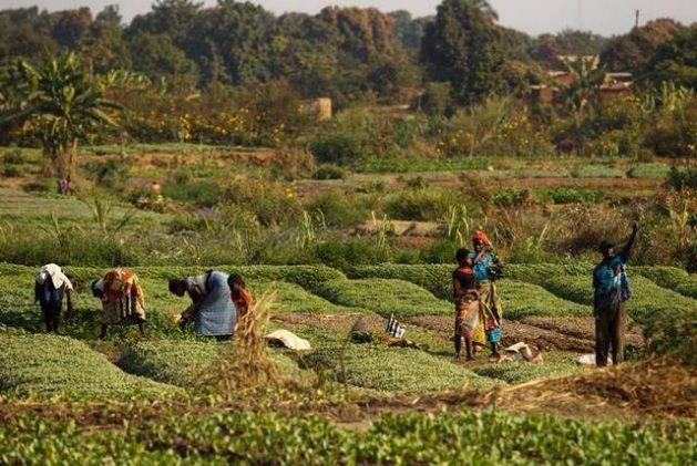 Un grupo de mujeres labora en una cooperativa agroecológica en un país africano. Foto: FAO